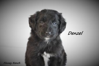 Denzel 1