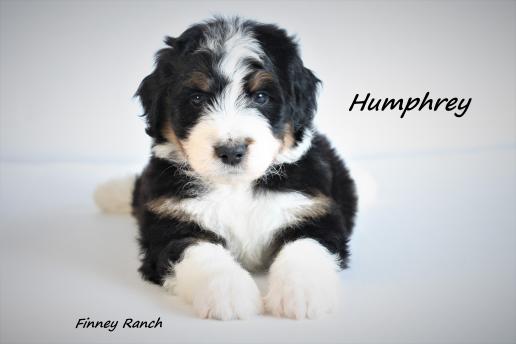 Humphrey 4