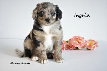 Ingrid 4