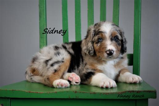 Sidney 1
